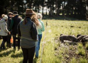 New Zealand-farm-tour3