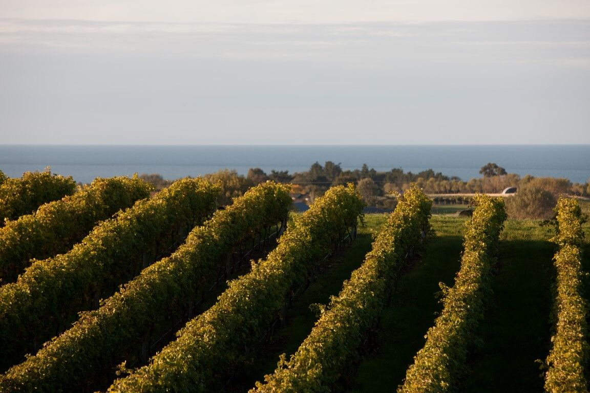 A view from one of the vineyards in Hawkes Bay